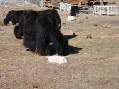 2-x-2009-wyprawa-do-mongolii-15