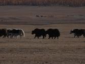 2-x-2009-wyprawa-do-mongolii-20