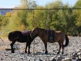23-ix-2009-selenge-wyprawa-do-mongolii-11