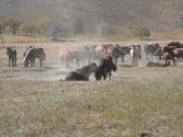 23-ix-2009-selenge-wyprawa-do-mongolii-3