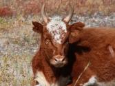 23-ix-2009-selenge-wyprawa-do-mongolii-6