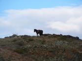 24-ix-2009-wyprawa-do-mongolii-12