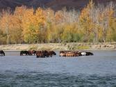 24-ix-2009-wyprawa-do-mongolii-3