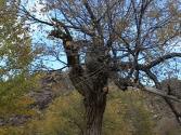 24-ix-2009-wyprawa-do-mongolii-9
