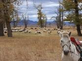 25-ix-2009-selenge-mongolia-13