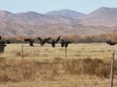 27-ix-2009-selenge-mongolia-1