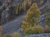27-ix-2009-selenge-mongolia-17