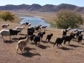 27-ix-2009-selenge-mongolia-5