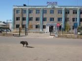 3-x-2009-wyprawa-do-mongolii-4