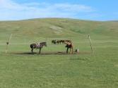 Typowy parking dla koni