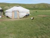 Pierwszy raz widziałem kury wokół jurty
