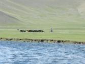 Rowerem też można paść bydło. Rzeka Orchon