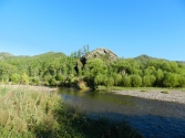 Zielono, lesiście, przyroda tętni pełnią życia