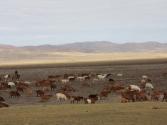 Typowy widok w Mongolii