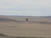 Taki widok tylko w Mongolii, krajobrazy, ptaki, wszystko na wyciągnięcie ręki