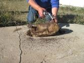 A tak przyrządza się tarbagana, czyli mongolskiego świstaka, jest to ponoć przysmak, aczkolwiek ja jestem odmiennego zdania