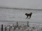 Psy się cieszą z zimowego poranka.
