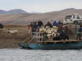 Przeprawa stada przez rzekę Onon