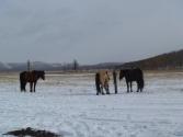 mongolia_wyprawa_76