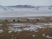 mongolia_wyprawa_80