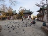 religia-w-mongolii-24