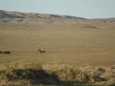 zdjecia-z-pustyni-gobi-w-mongolii-8