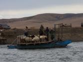 Przeprawa stada przez rzekę Onon. Mongolia, Chentej 2010