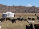 zycie-codzienne-selenge-2009-mongolia-11