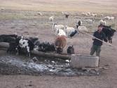 zycie-codzienne-selenge-2009-mongolia-2