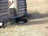 zycie-codzienne-selenge-2009-mongolia-34