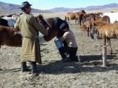 zycie-codzienne-selenge-2009-mongolia-36