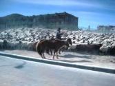 zycie-codzienne-selenge-2009-mongolia-86