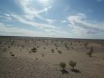 Zdjęcia z pustyni Gobi w Mongolii
